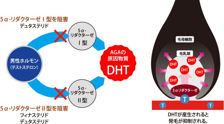 5α還元酵素阻害薬作用機序